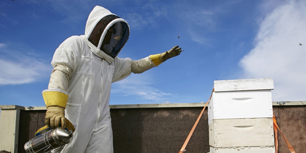 Live Bee Removal East Los Angeles