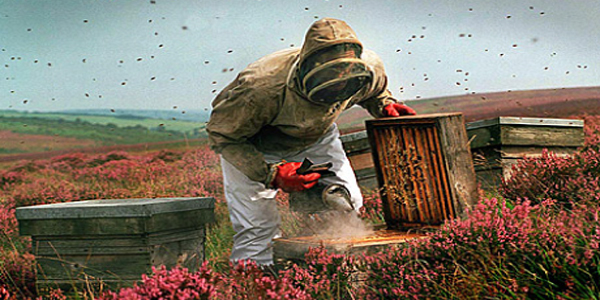 Live Bee Removal Los Angeles