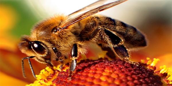 Live Bee Removal In San Bernardino