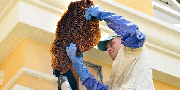 Live Bee Removal Palm Springs