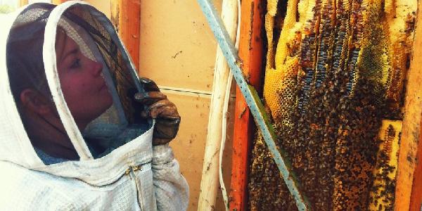 Live Bee Removal Redlands