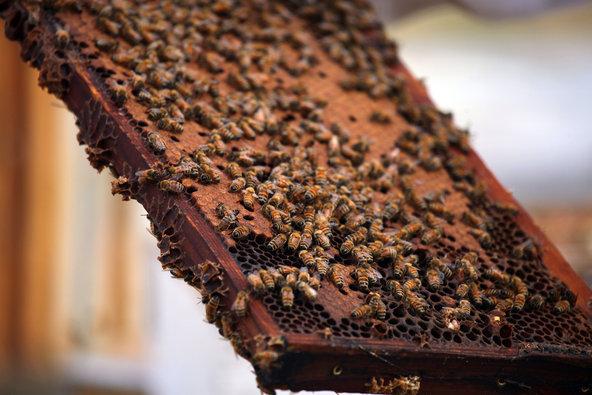 Live Bee Removal Loma Linda