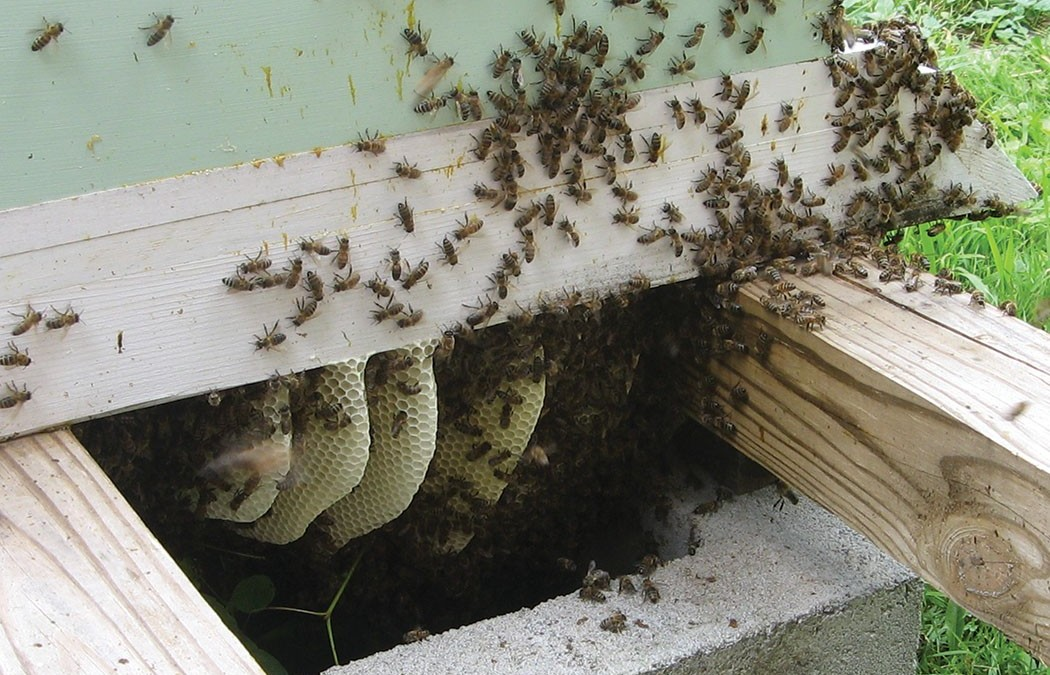 Live Bee Removal-Cathedral City