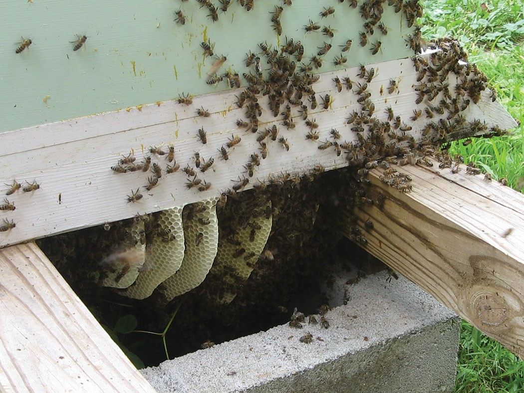 Live Bee Removal-Cathe...