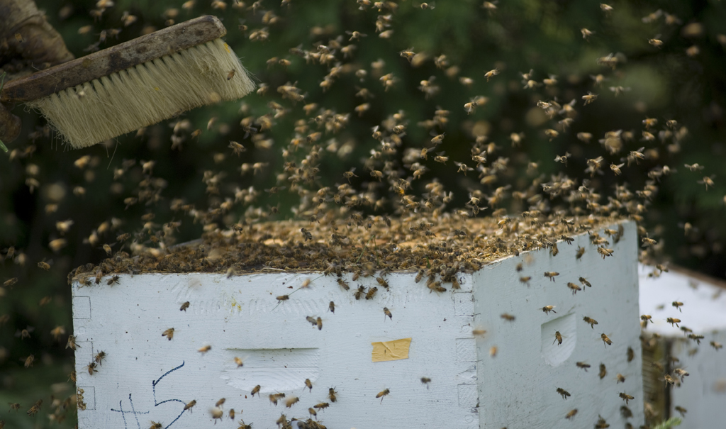 Live Bee Removal Indian Wells
