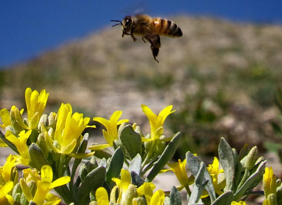 Hive & Swarm Relocation