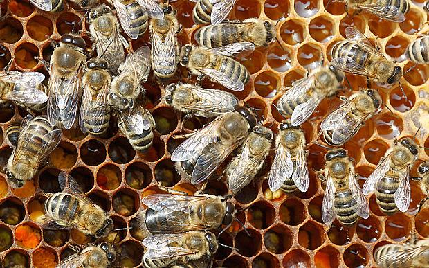 Live Bee Removal Oak Glen