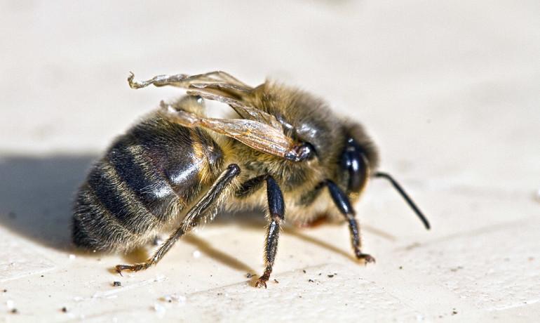 Honey Bee Rescue