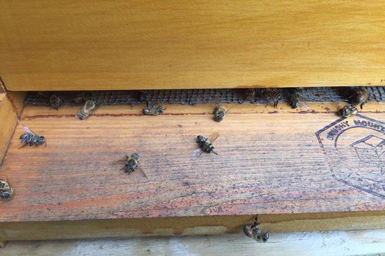 Bees Swarming at Riverside