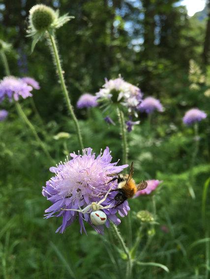 Live USA Bee Removal