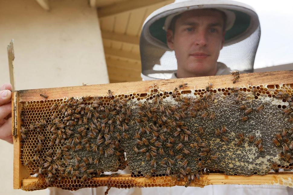 Swarming Bee Removal