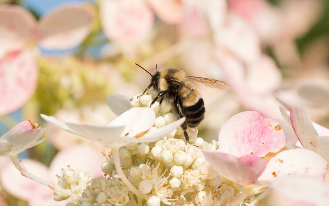 Bee Removal-Affordable...