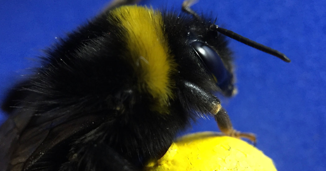 Demonstrate USA Live Bee Removal