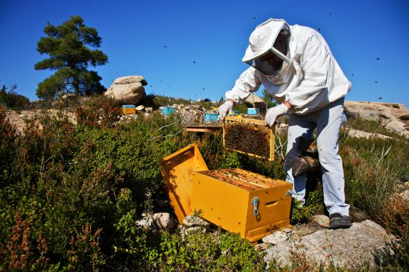 Saving Bees in USA Live Bee Removal