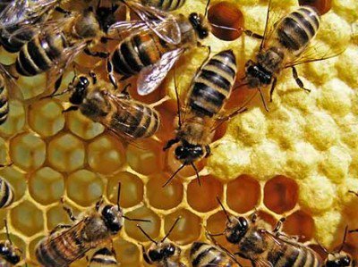 Prevent Extinction of Bees