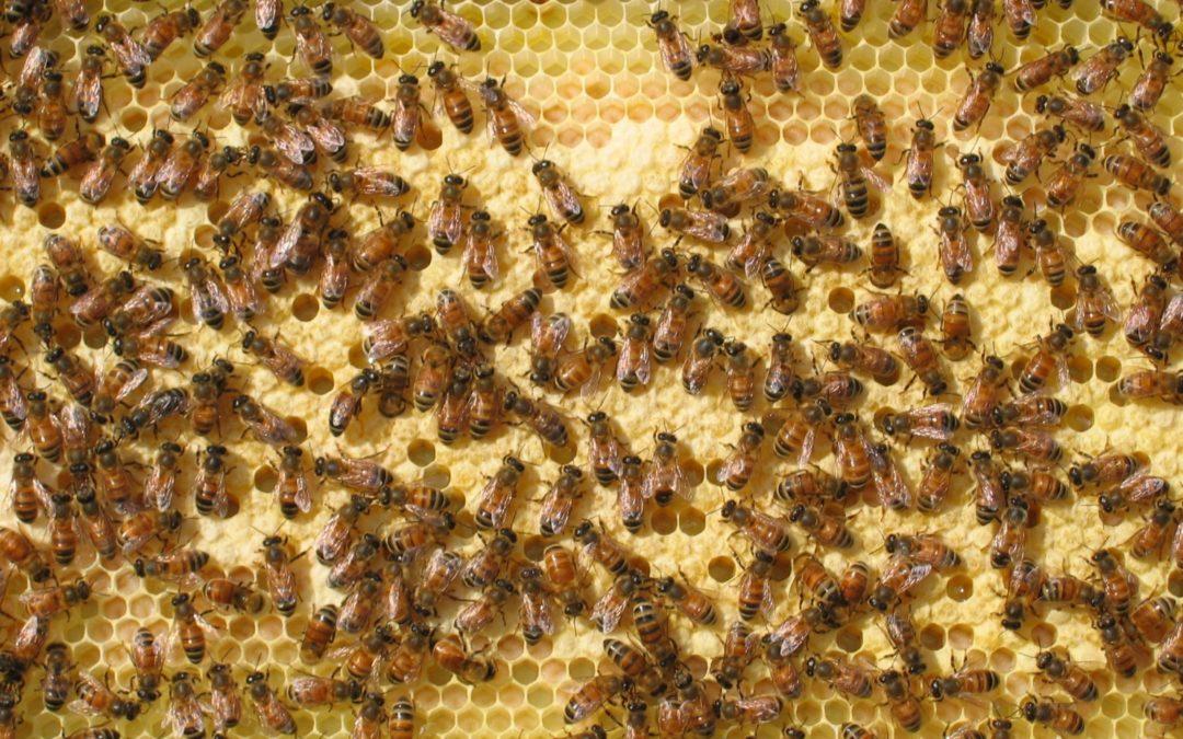 Stop Harming HoneyBees...