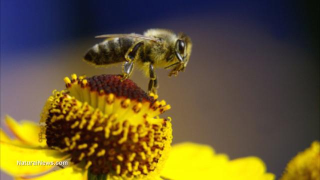 Endanger Bees