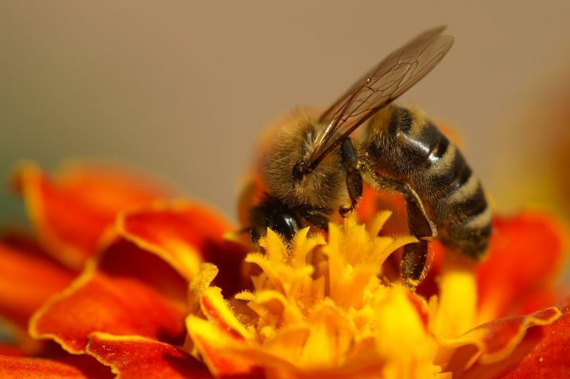 Protect Bees