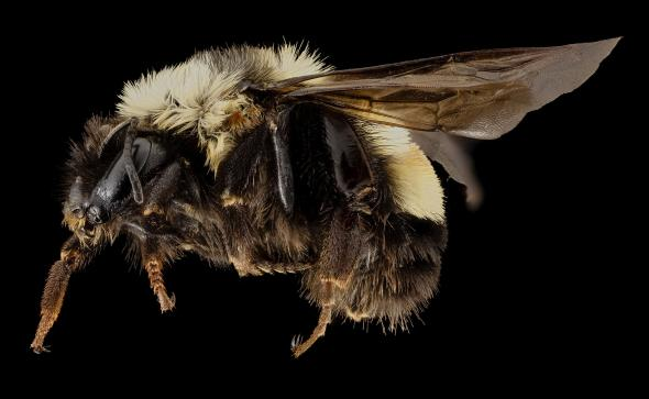 Help Prevent Bees from Becoming Endangered