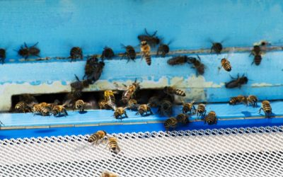 USA Live Bee Removal is aware of bee's friendliness
