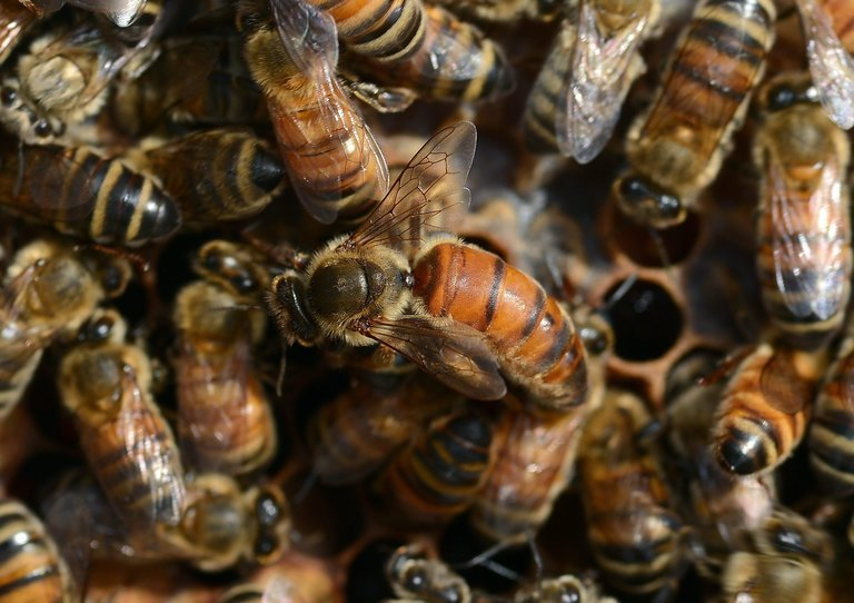 The Antidote That Stops Honeybees From Becoming Queens