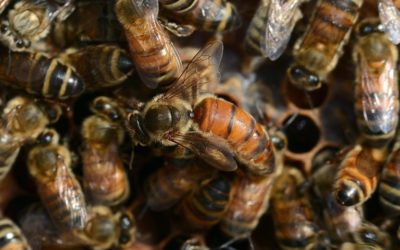 Prevent a large impact by the rising death of honeybees