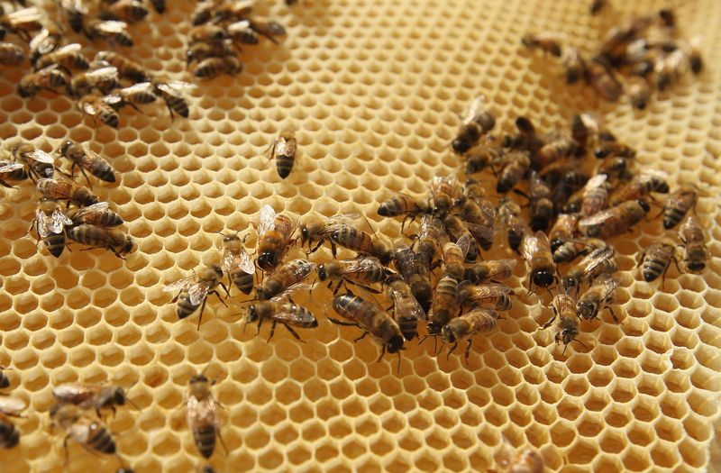 Making Bees Healthy and Strong
