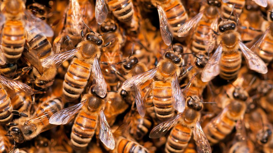 USA Live Bee Removal makes Research on Why Bees exist