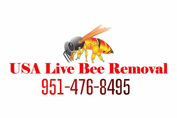 Free Bee Removal Quote