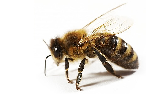 high rated bee removal company usa live bee removal