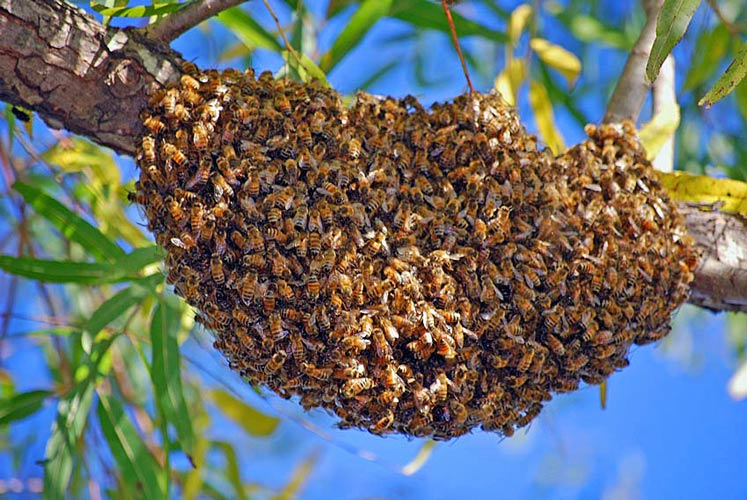 Best Inland Empire Bee Removal