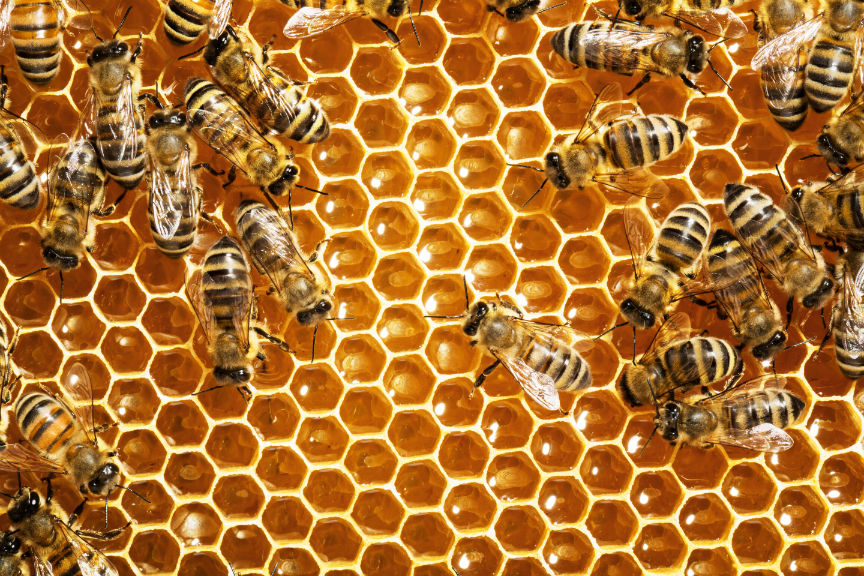 Relocate Bees From Your Home