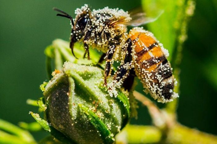 Loma Linda Live Bee Removal