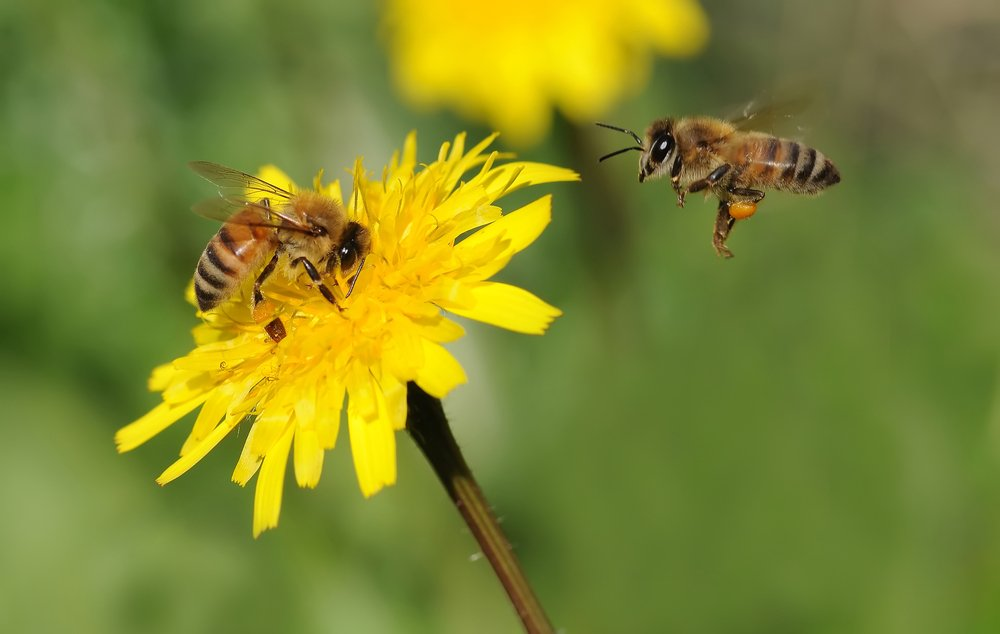 Low-Cost-Bee Removal Service