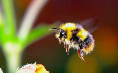 Affordable Bee Remover Services