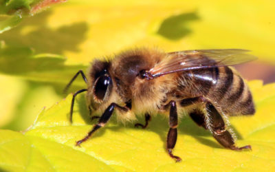 Bee Removal Services Near Me