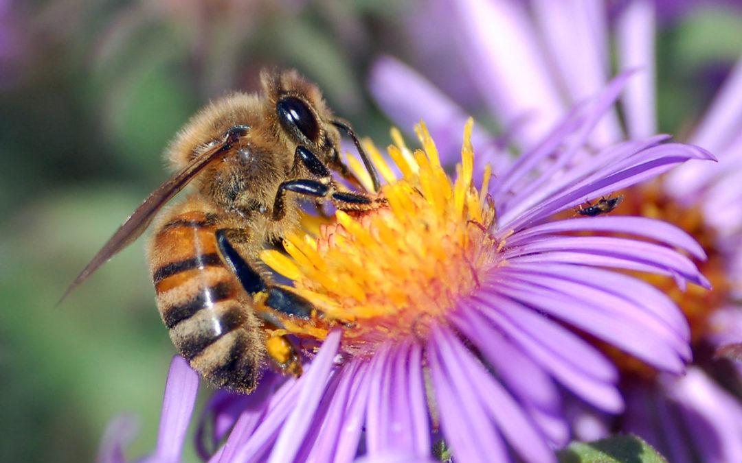 Beekeeping Inland Empire