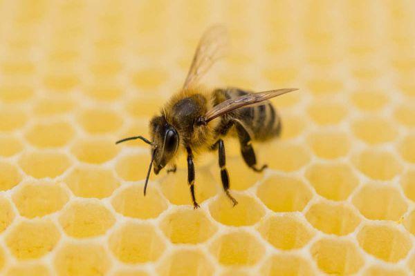 Bee Removal-Rancho Cucamonga