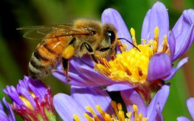 Removing Honey Bees LA-IE