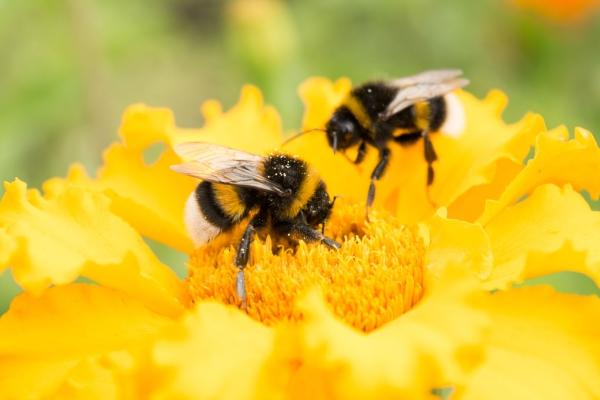 Corona Honey Bee Removal
