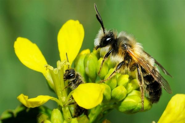Bee Removal Company