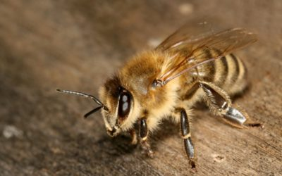 Best Bee Removal Services