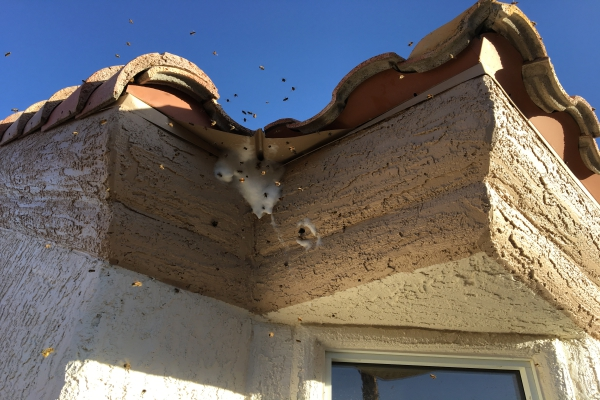 Bee Nest Control Service