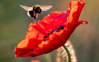 Bee Removal Services–Riverside