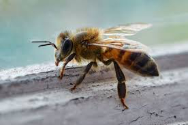 Bee Removal in Temecula