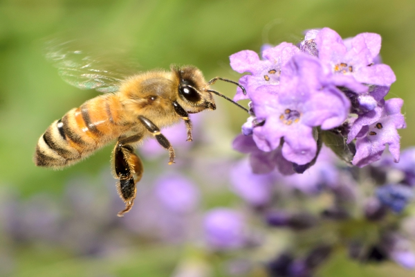 Bee Removal Service Irvine