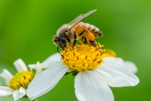 Bee Season is Over