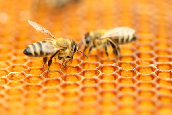 Expert Bee Removal Corona