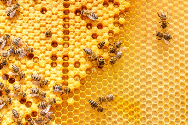 Remove Bees From Businesses