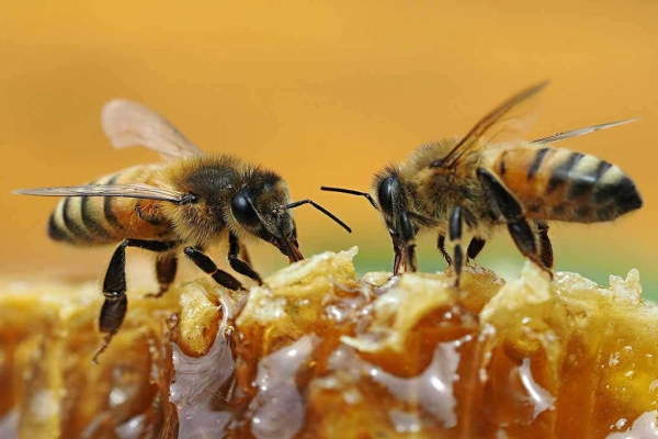 Riverside County Bee Removal